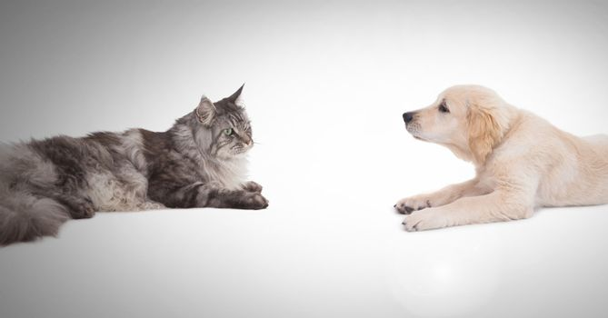 Cat and dog having a stare off