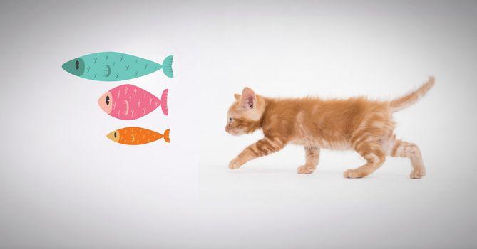 Kitten walking after fish graphics