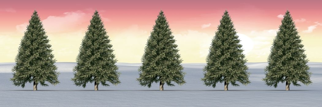Christmas trees in winter landscape with sunset