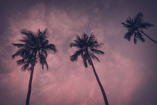 Vintage toned Silhouette of palm trees at tropical coast over sky Tropical beach background. Instagram look. vacation travel concept.