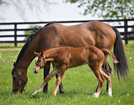 Thoroughbred horse farms are a common sight in rural Kentucky