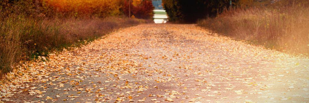 Road passing through autumn trees