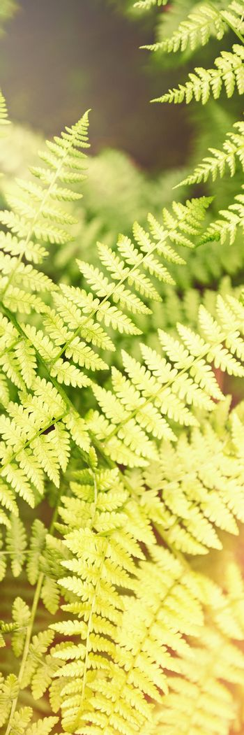 Leaf fern in the forest