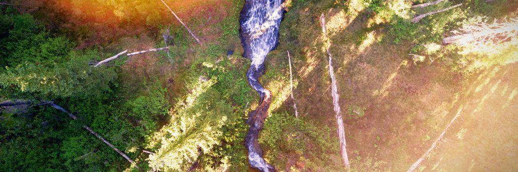 Stream flowing through green forest