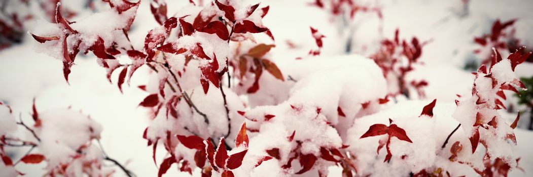 Flora covered with snow