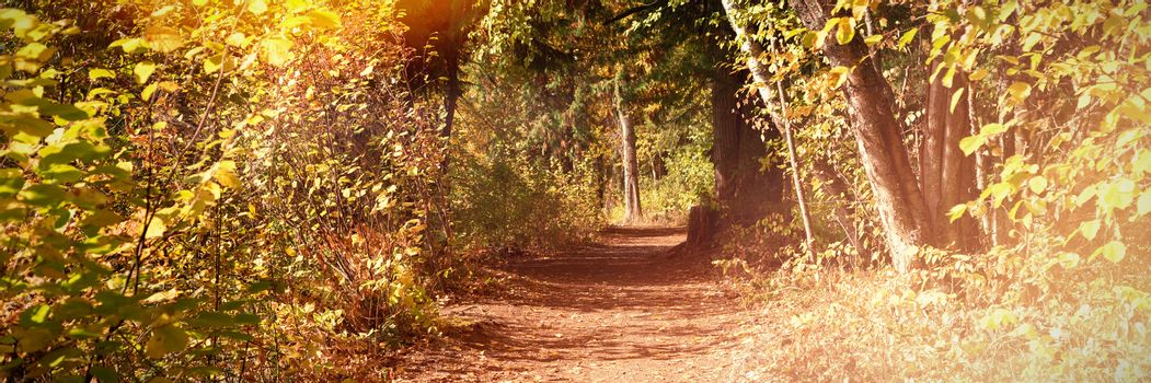 Pathway with trees in the forest