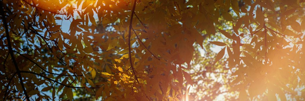 Sunlight passing through green trees