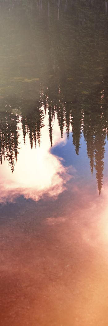 Reflection of dense coniferous trees