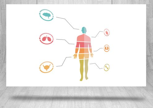 Educational human body chart on hanging card