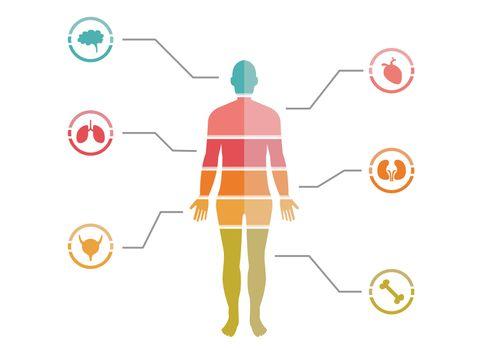 Colorful Human Body Chart