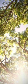 Bright sunlight passing through the trees
