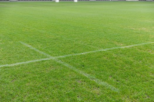 Close-up of white line on a grass in the rugby stadium
