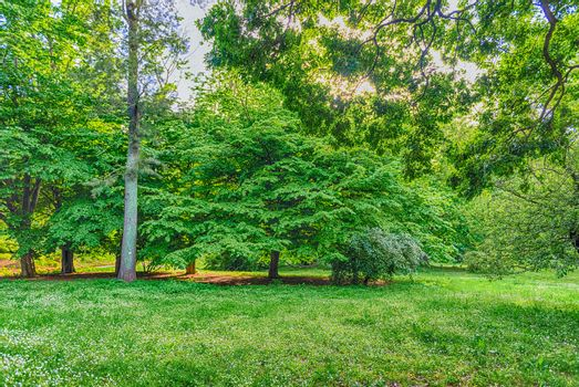 Beautiful forest with trees and green foliage. May be used as a background concept for nature and environment