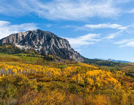 Golden Leaves of Aspen Trees in the Beautiful Rocky Mountains of Colorado.