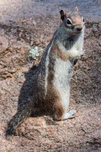 Ground squirrels, chipmonks, all kinds of little rodents just nibbling away.