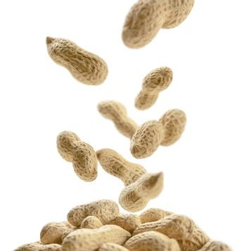 Peanuts in the shell levitate on a white background.
