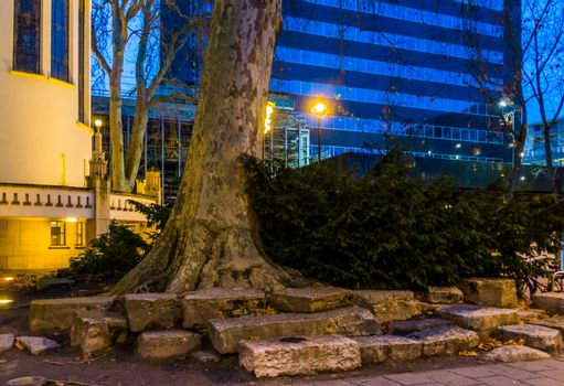 Tree trunk with a conifer bush, Nature decorations in the streets of Tilburg, City center, Urban scenery and architecture
