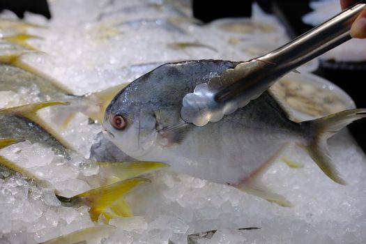 The fresh local fish on the ice and selling at the seafood market. Hand picking up Chilled seafood by metal tong at market. Selective focus close up.