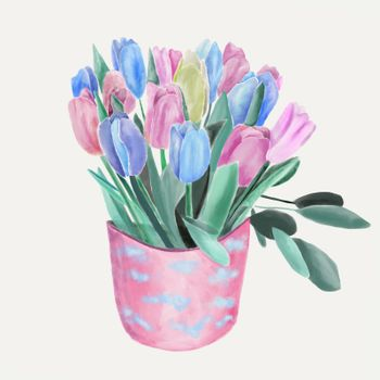 Watercolor Floral Bouquet with tulips illustration. Bouquets of spring pink and blue flowers in pot.