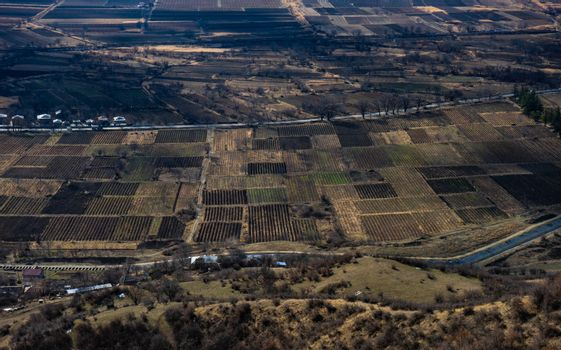 Vineyards in Manavi, Kakheti region