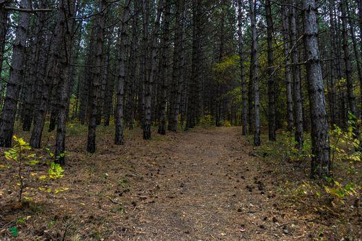Forest pathway in autumnal Caucasus mountan in Tianeti area in Georgia