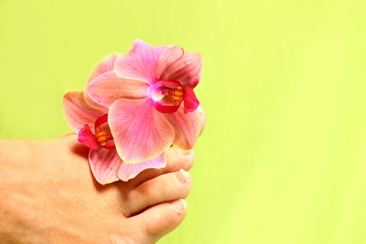 wellness themes close up with flowers