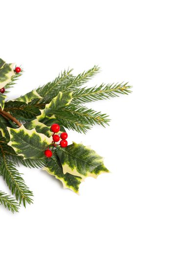 Holly and fir tree branches