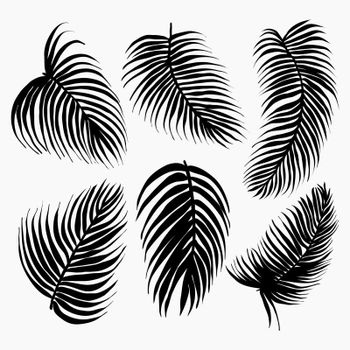 Vector Set of black silhouettes of tropical leaves palm tree.