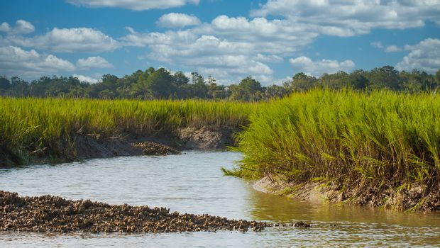 Oyster Bed by Salt Water Marsh