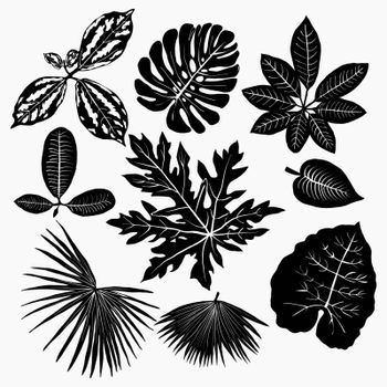 Vector Tropical plants leaves silhouettes set isolated on white background.