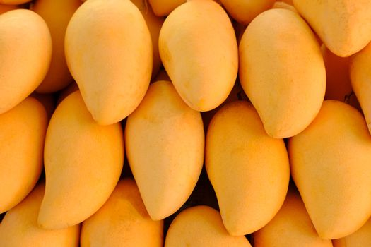 Close-up of Fresh Yellow Mangoes tropical fruits background or wallpaper. Fresh ripe exotic mango stack.