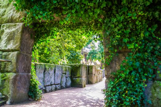 stone passage wall overgrown with ivy leaves, Beautiful garden architecture
