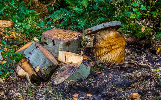 fresh chopped wood logs in the forest, Deforestation, Environment awareness