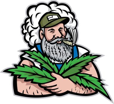 Mascot icon illustration of an American organic hemp farmer with beard smoking and holding cannabis leaves viewed from front on isolated background in retro style.