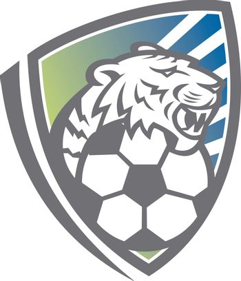 Mascot icon illustration of head of a tiger or big cat with soccer football ball set inside shield or crest viewed from front on isolated background in retro style.