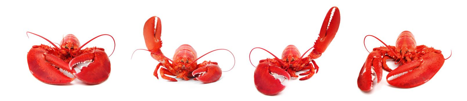 hello lobster set isolated on white background