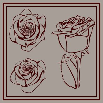 Three elegant hand drawn dark red roses on grey background