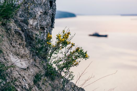 yellow flowers on cliff