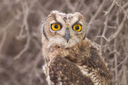 Owl in the wilderness