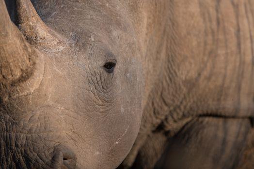 Rhino in the wilderness