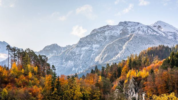 Snow-capped mountain with colorful of tree in forest of Interlaken, Switzerland. Early winter of November 2019, snow start to cover mountain area with cold temperature.