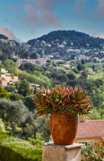 Cactus Pot in South of France