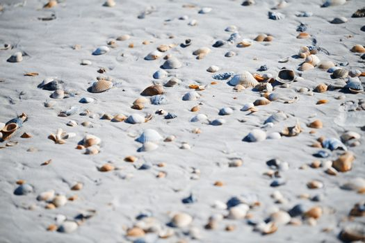 Fullframe photo of the seashells on the coast of Atlantic Ocean