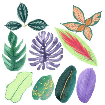Hand drawn collection of tropical leaves isolated on white background. Watercolor Green nature exotic plants illustration.