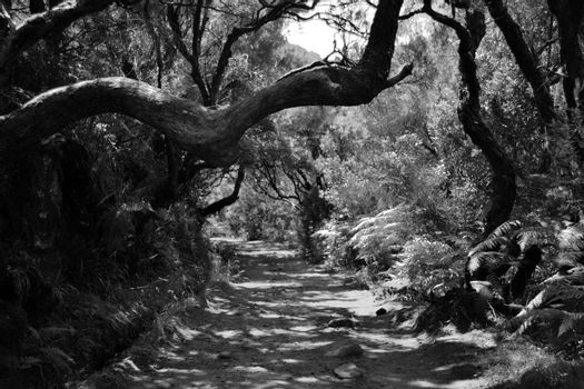 Dirt trail through a green forest in black and white