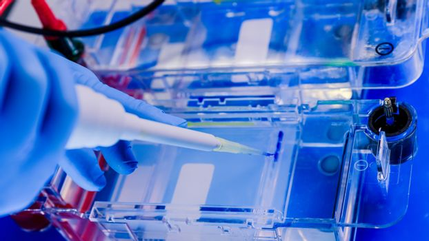 Protein separation on gels in a Electrophoresis chambers. Concept of science, laboratory and study of diseases. Coronavirus (COVID-19) treatment developing.