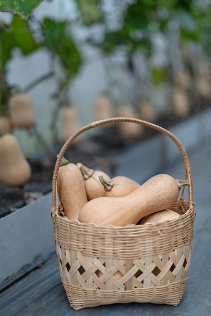 butternut squash in bamboo basket