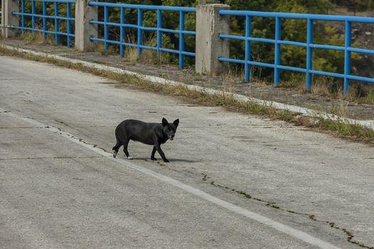 View from road over reservoir wall of Topolnitsa dam with black dog, village Muhovo, Ihtiman region, Bulgaria, Europe