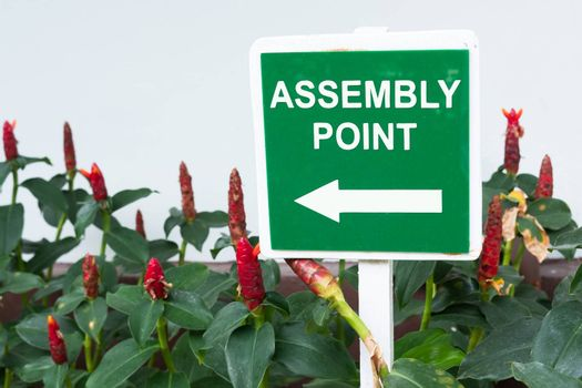 Assembly point in green color signpost in the garden nature background. Emergency assembly point sign board