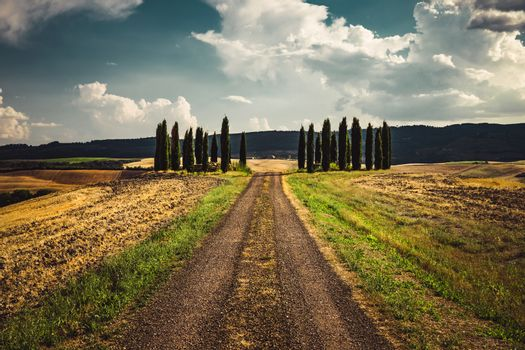 Beautiful view of the Italian countryside, dirt road goes through wheat fields along which majestic high cypress trees stand, the beauty of a Tuscan nature